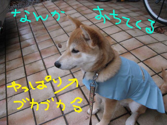 f:id:maki-mama:20090123083440j:image:w300