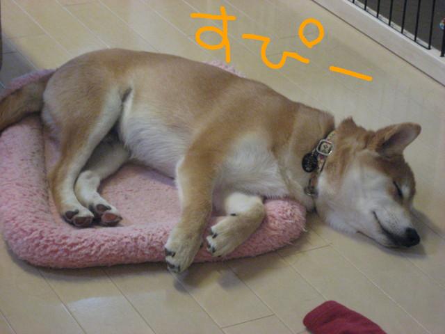 f:id:maki-mama:20090123085954j:image:w300