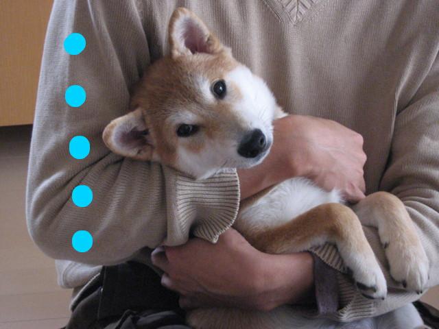 f:id:maki-mama:20090124212421j:image:w300