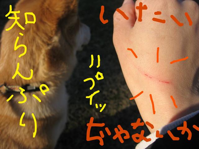 f:id:maki-mama:20090125171957j:image:w300