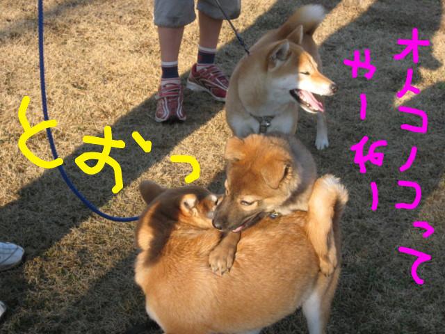 f:id:maki-mama:20090125171959j:image:w300