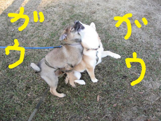 f:id:maki-mama:20090125172000j:image:w300