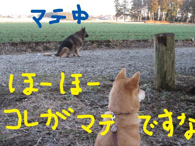 f:id:maki-mama:20090125172003j:image:w300