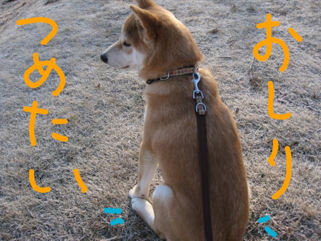 f:id:maki-mama:20090126144027j:image:w300