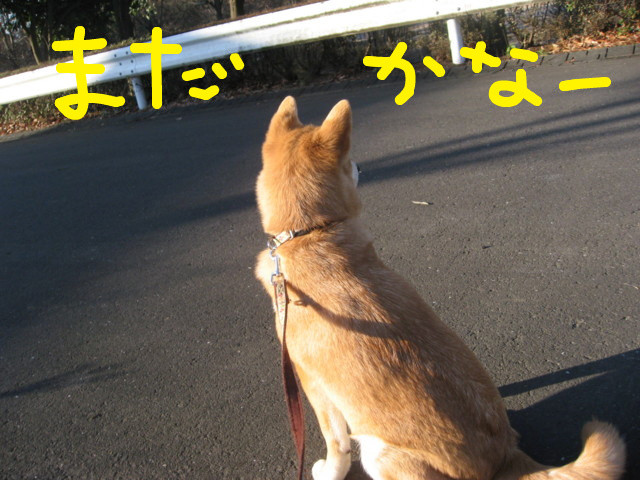 f:id:maki-mama:20090126144030j:image:w300