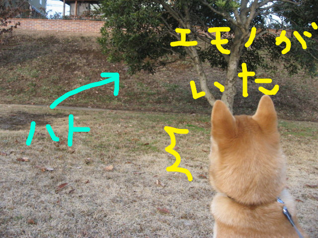 f:id:maki-mama:20090127121704j:image:w300
