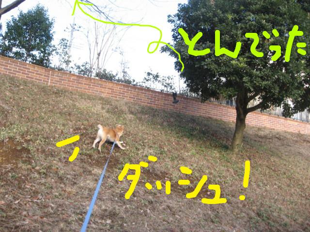 f:id:maki-mama:20090127121705j:image:w300