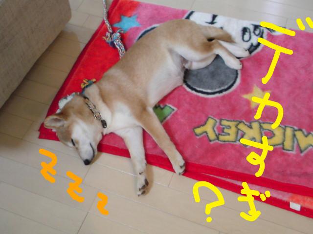 f:id:maki-mama:20090129140218j:image:w300
