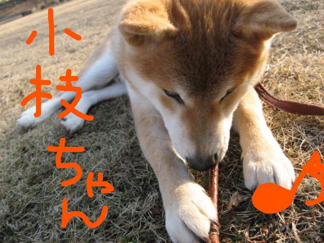 f:id:maki-mama:20090129140336j:image:w300