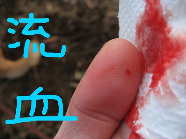 f:id:maki-mama:20090129140337j:image:w150