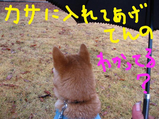 f:id:maki-mama:20090131094959j:image:w300