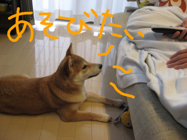 f:id:maki-mama:20090131131248j:image:w300