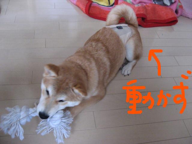 f:id:maki-mama:20090131170019j:image:w300