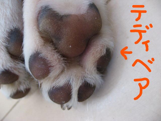 f:id:maki-mama:20090201104838j:image:w300