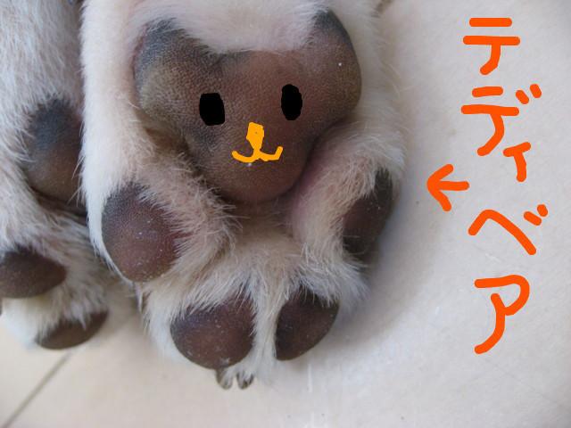 f:id:maki-mama:20090201105251j:image:w300