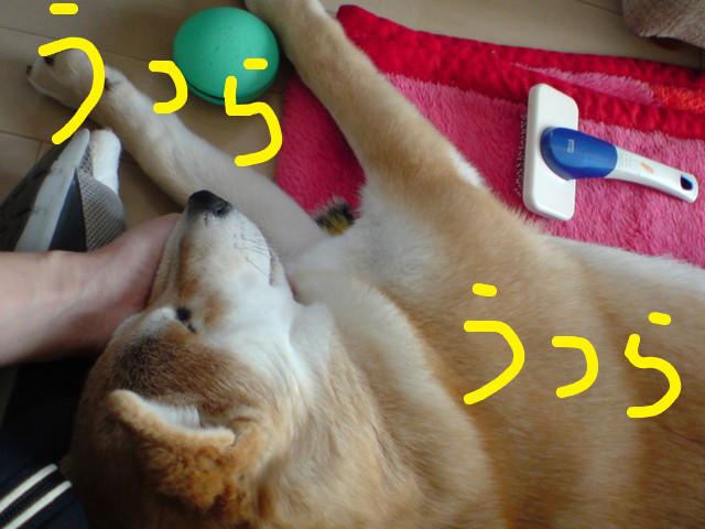 f:id:maki-mama:20090203121936j:image:w300