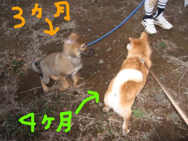 f:id:maki-mama:20090204114343j:image:w300