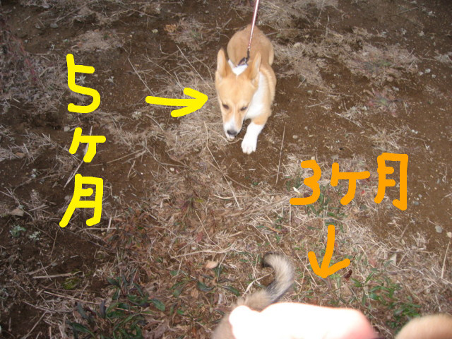 f:id:maki-mama:20090204114344j:image:w300