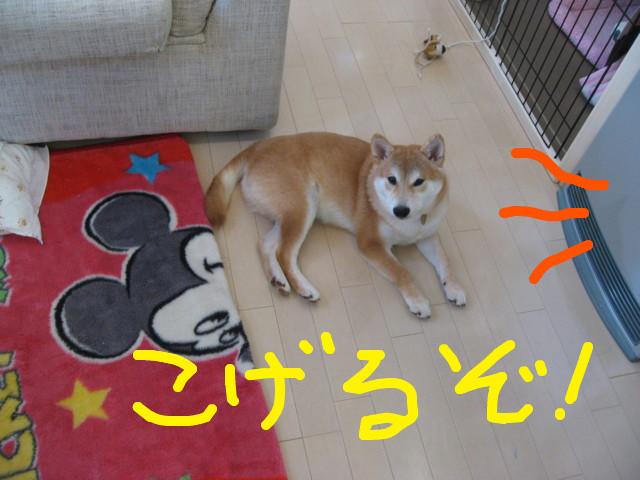 f:id:maki-mama:20090204114346j:image:w300