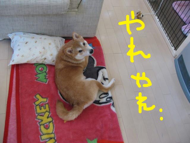 f:id:maki-mama:20090204114347j:image:w300
