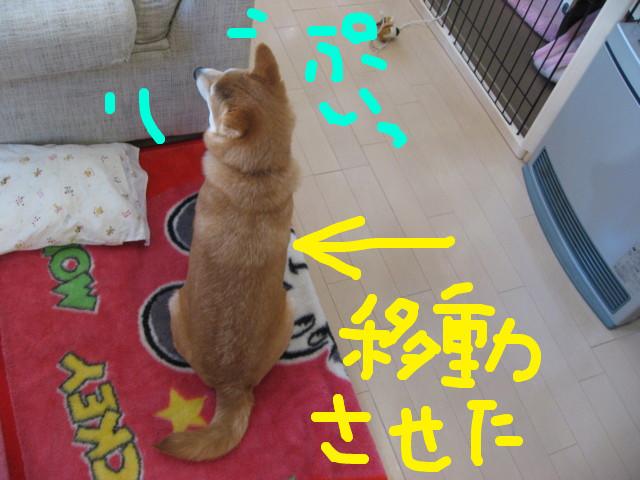 f:id:maki-mama:20090204114348j:image:w300