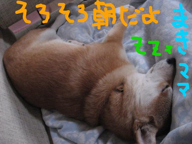 f:id:maki-mama:20090204114350j:image:w300