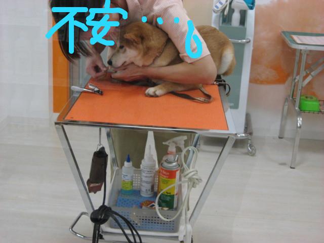 f:id:maki-mama:20090205101048j:image:w300