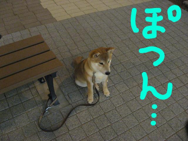 f:id:maki-mama:20090205101049j:image:w300