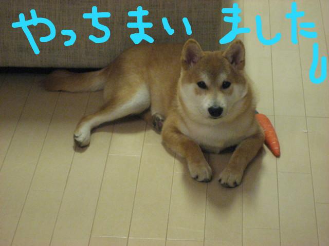 f:id:maki-mama:20090205101051j:image:w300