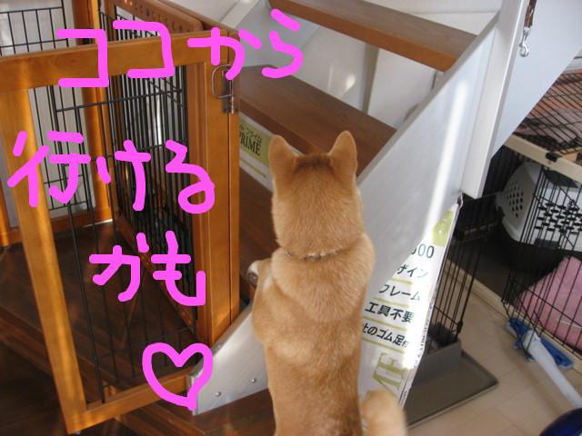 f:id:maki-mama:20090206123243j:image:w300