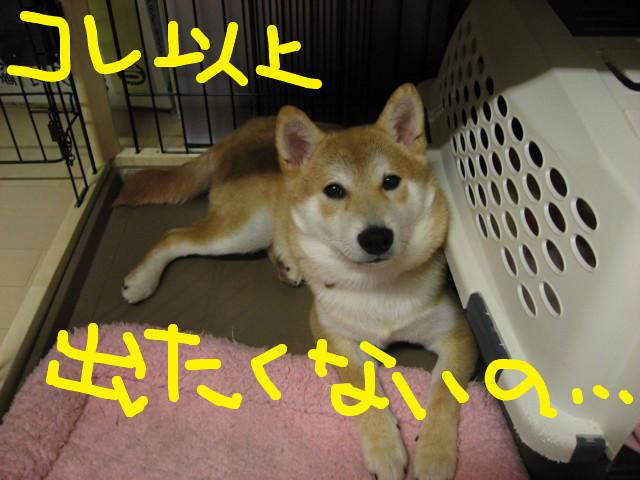 f:id:maki-mama:20090206210949j:image:w300