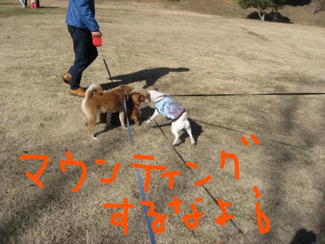 f:id:maki-mama:20090208174218j:image:w300