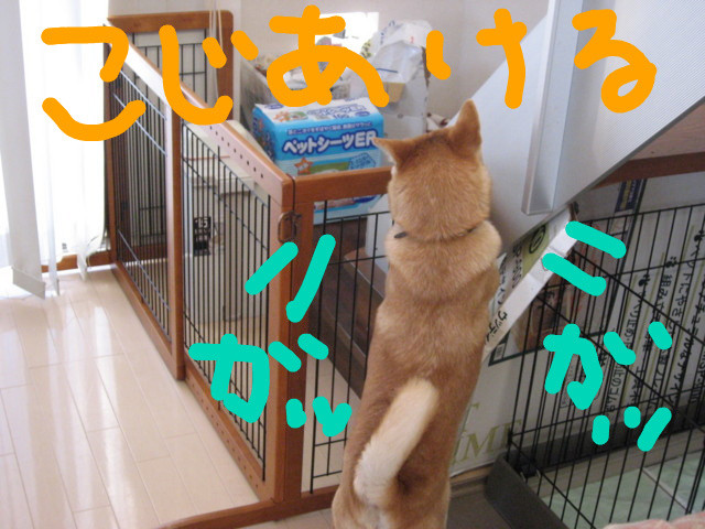 f:id:maki-mama:20090208174225j:image:w300