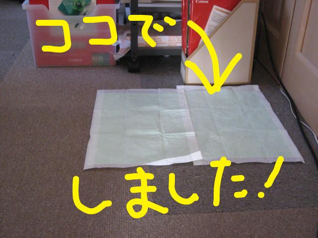 f:id:maki-mama:20090208174228j:image:w300