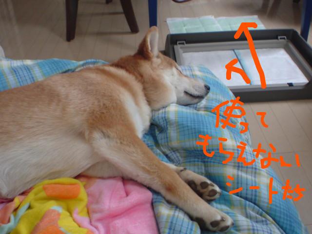 f:id:maki-mama:20090213104150j:image:w300