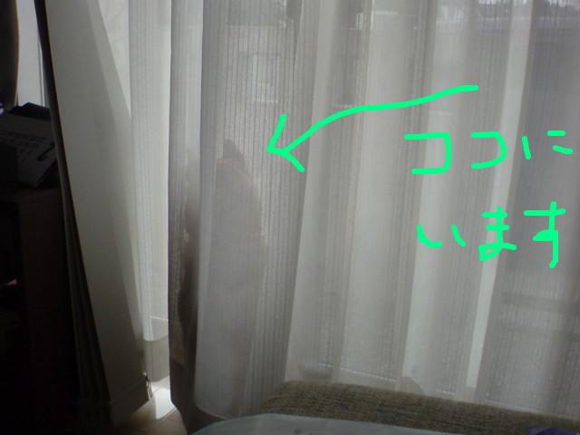 f:id:maki-mama:20090213104451j:image:w300
