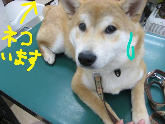 f:id:maki-mama:20090213174042j:image:w300
