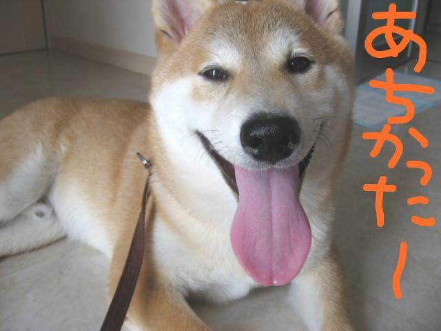 f:id:maki-mama:20090214143850j:image:w300