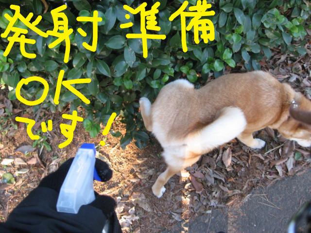 f:id:maki-mama:20090217092957j:image:w300