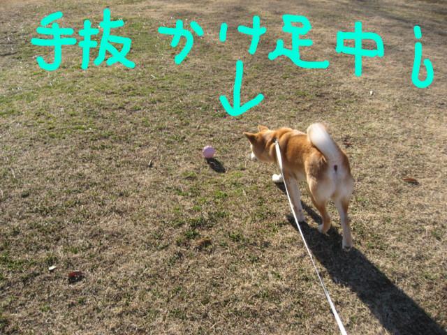 f:id:maki-mama:20090217093001j:image:w300