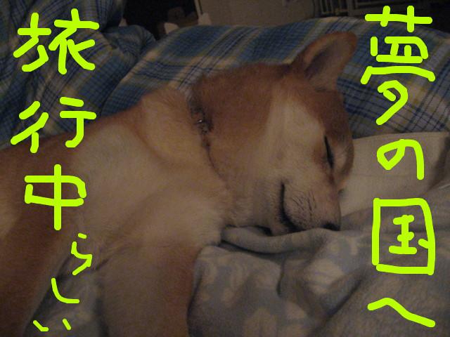 f:id:maki-mama:20090219101416j:image:w300