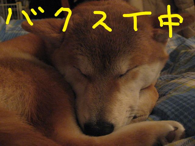 f:id:maki-mama:20090219101419j:image:w300