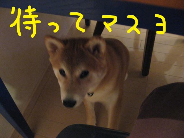 f:id:maki-mama:20090220102022j:image:w300