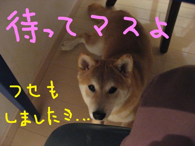 f:id:maki-mama:20090220102023j:image:w300