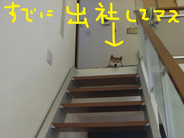 f:id:maki-mama:20090220102026j:image:w300