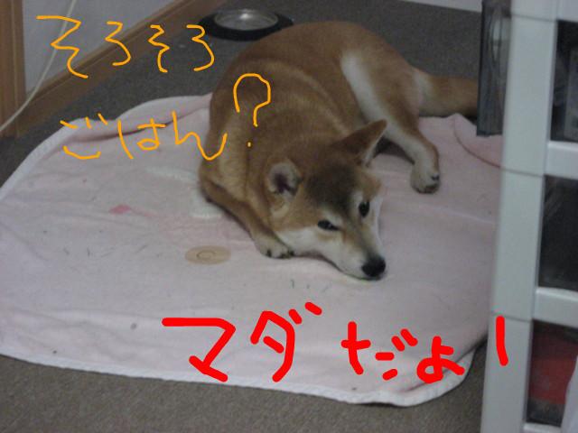 f:id:maki-mama:20090223151126j:image:w300