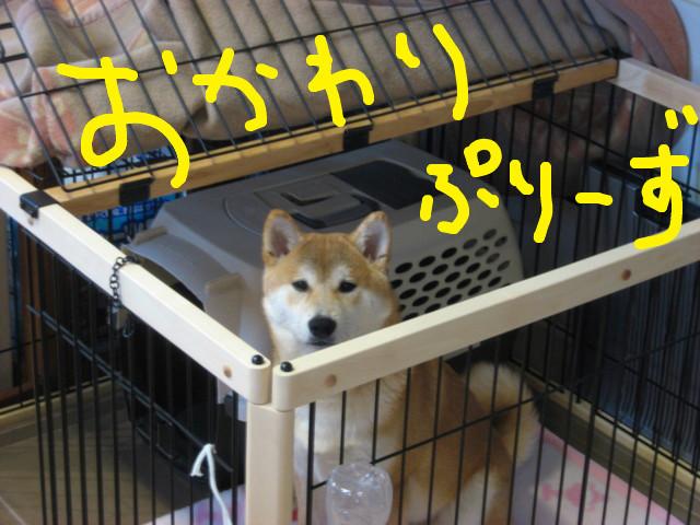 f:id:maki-mama:20090223151132j:image:w300