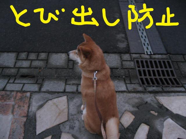f:id:maki-mama:20090225160219j:image:w300