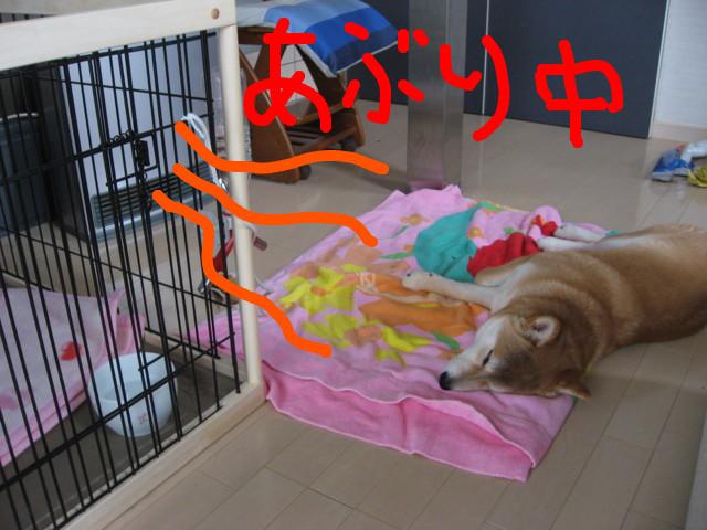 f:id:maki-mama:20090227113841j:image:w300