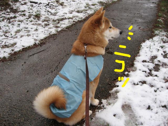 f:id:maki-mama:20090227172400j:image:w300